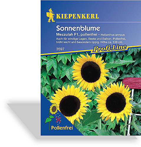 sonnenblume mezzulah saatgut von kiepenkerl. Black Bedroom Furniture Sets. Home Design Ideas