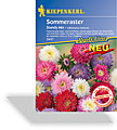 Aster, Sommeraster Standy Mix, Tolerant, Kiepenkerl