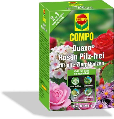 Duaxo rosen pilz frei for Gelbtafeln gegen zikaden