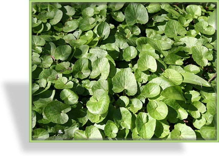 Prächtig Bodendecker Pflanzen #II_89