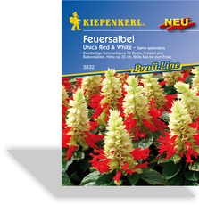 Feuersalbei Unica Red + White