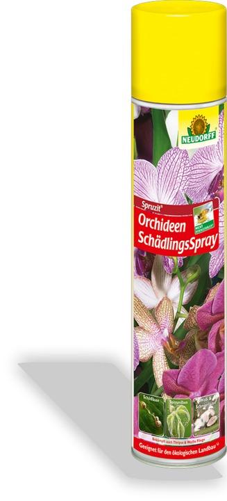spruzit orchideen sch dlingsspray sch dlingsfrei. Black Bedroom Furniture Sets. Home Design Ideas