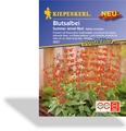Blutsalbei Summer Jewel Red, Kiepenkerl