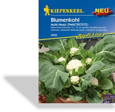 Blumenkohl Multi-Head