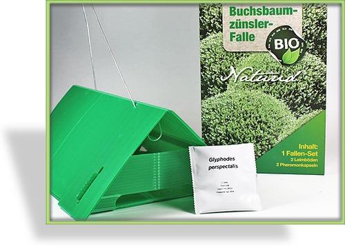 buchsbaumz nslerfalle nematoden. Black Bedroom Furniture Sets. Home Design Ideas